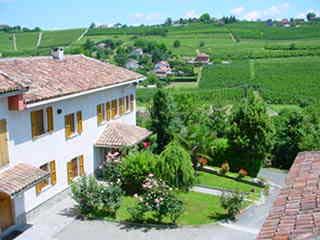 vingård piemonte