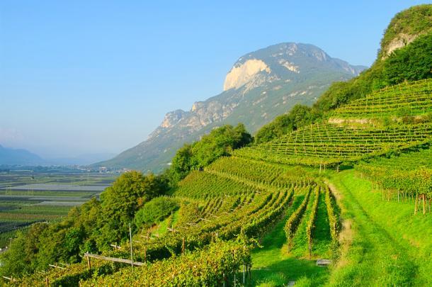 vingård i fjellene